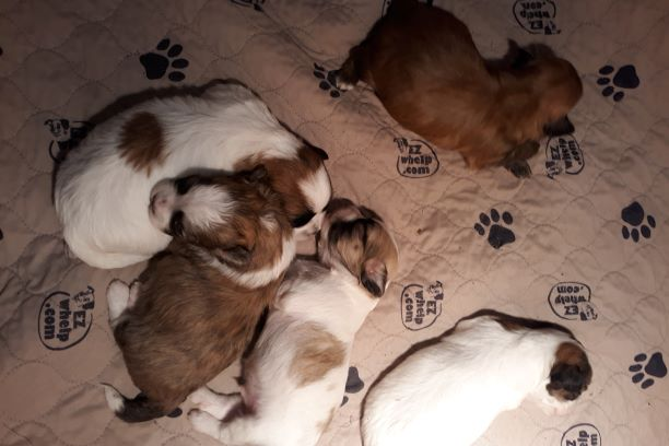 Sogies puppies 2
